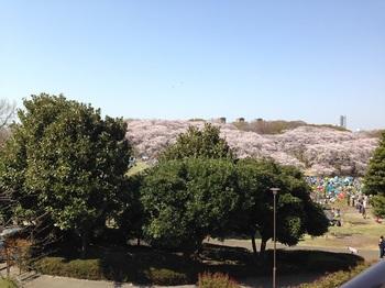 1_根岸森林公園.jpg